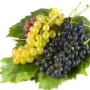 Ultima cura cu fructe de sezon – cura de struguri